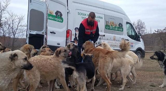 Tüpraş, Sokak Hayvanlarının Yiyecek İhtiyacı için Desteğini Sürdürüyor