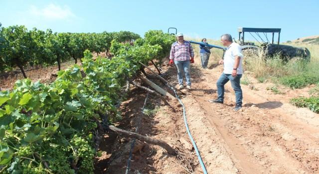 Alaşehir'de fırtınada zarar gören bağlarda hasar tespit çalışmaları başladı