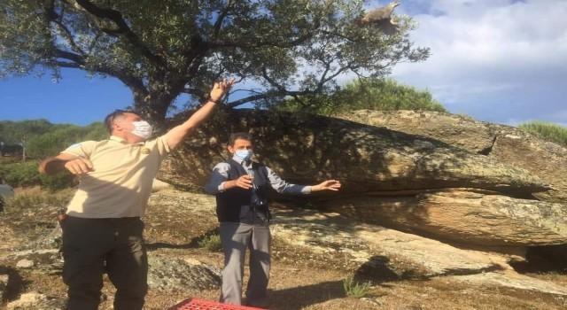 Aydın'da yüzlerce keklik doğaya salındı
