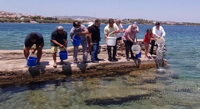 Datça'da 20 bin levrek yavrusu denizle buluştu