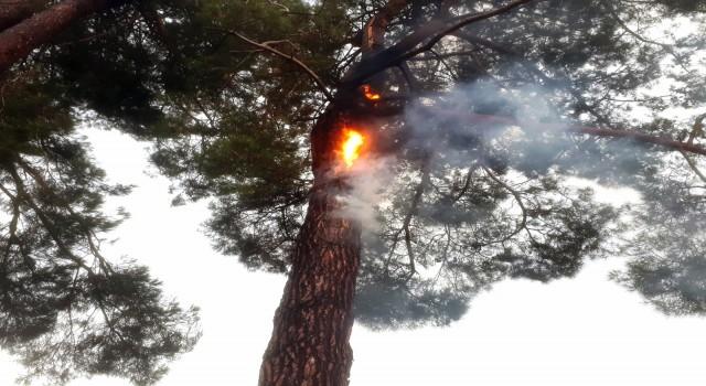 Muğla'da 12 günde 48 yıldırım yangını