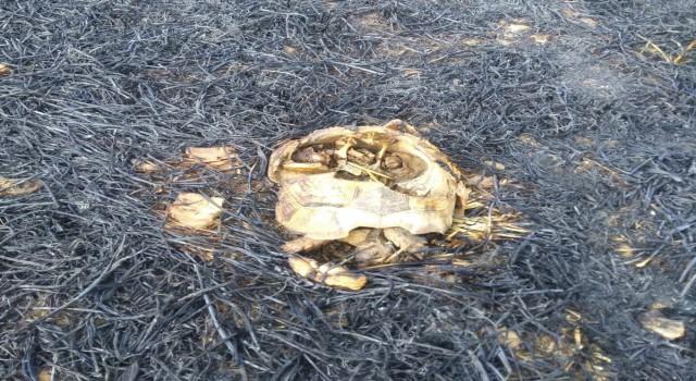 Anız yangınında hayvanlar telef oldu