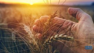 DEVA Partisi'nden Dünya Çiftçiler Günü açıklaması