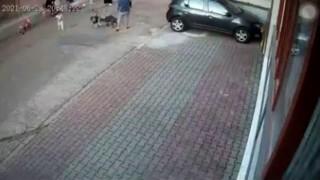Kartal'da 9 yaşındaki çocuğa pitbull'un saldırdığı anlar kamerada