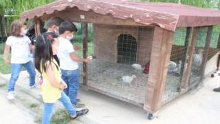 Bu tavukların sahibi anasınıfı öğrencileri
