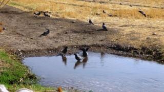 Sıcaktan bunalan güvercinler göletlerde serinledi
